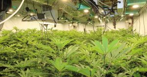 How Albanian crime groups are turning Nottinghamshire warehouses and factories into large cannabis farms